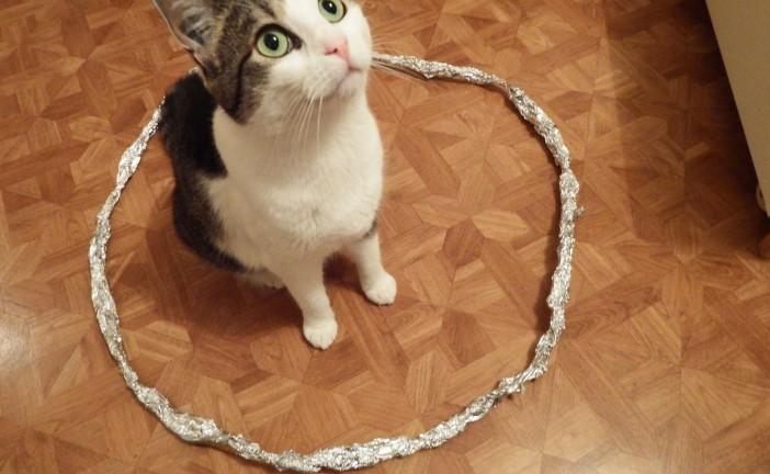 為何圈圈能「捕貓」?